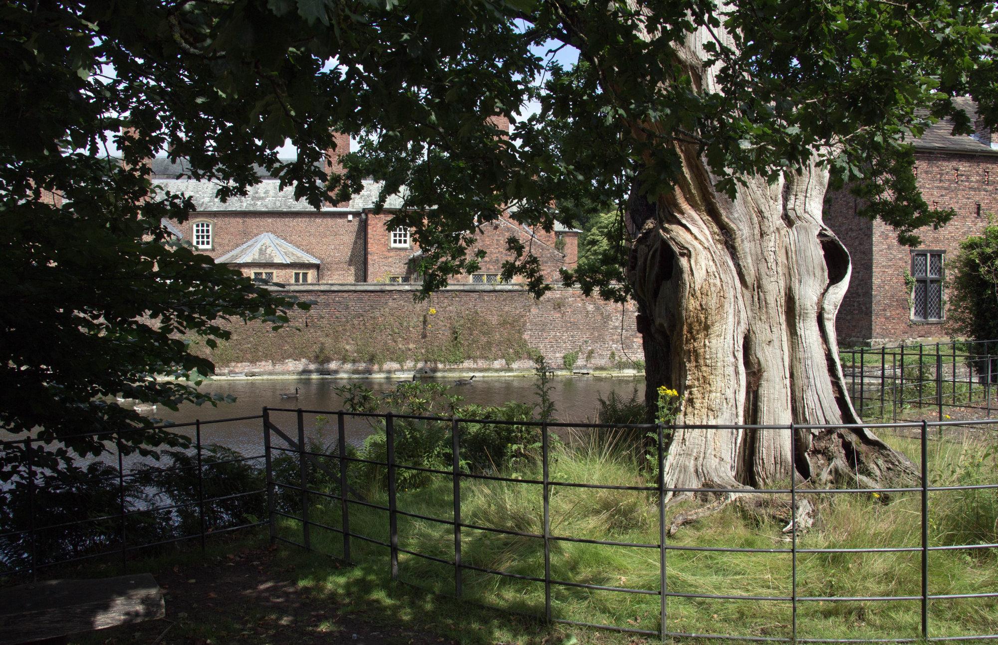 Old tree.