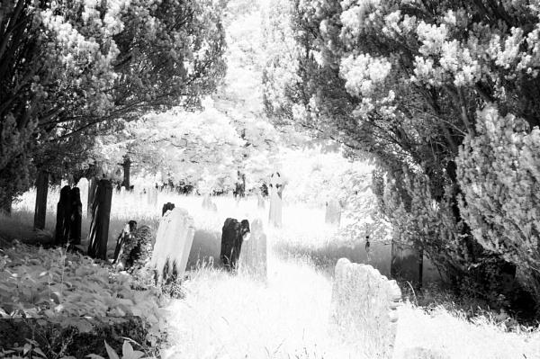 Between the Yew Trees by Nikonuser1
