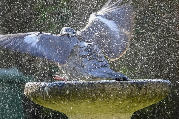 Splish splash by deavilin