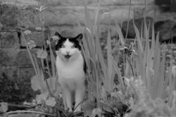 O. M. G   Cat by my Pond