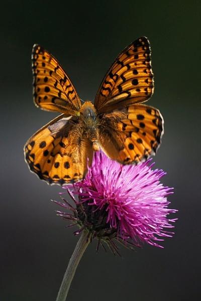 Natural floral ornament by MAK54