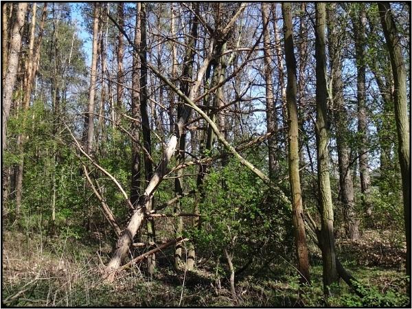 broken trees in the wood by FabioKeiner