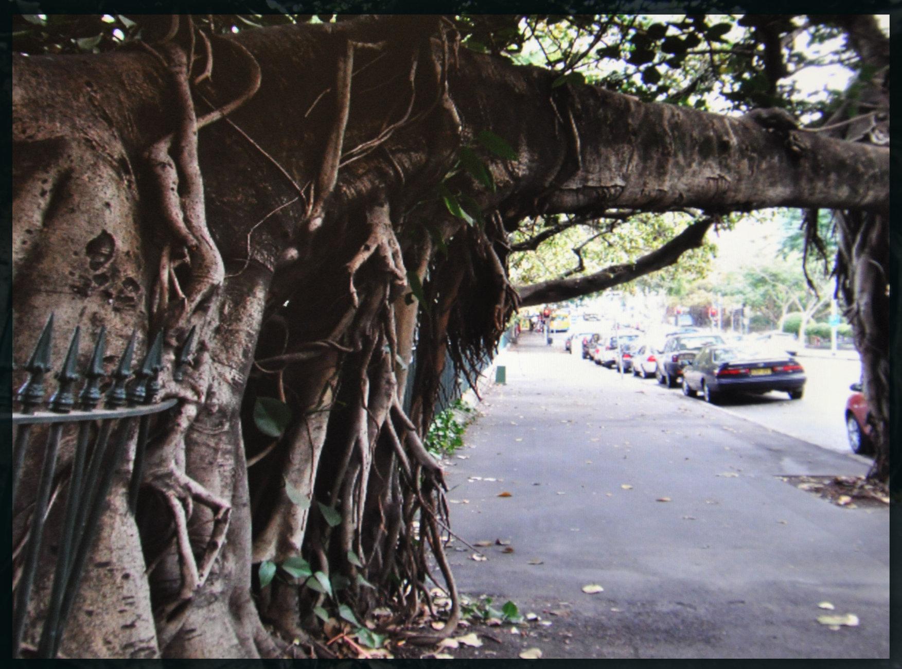 Australia tree