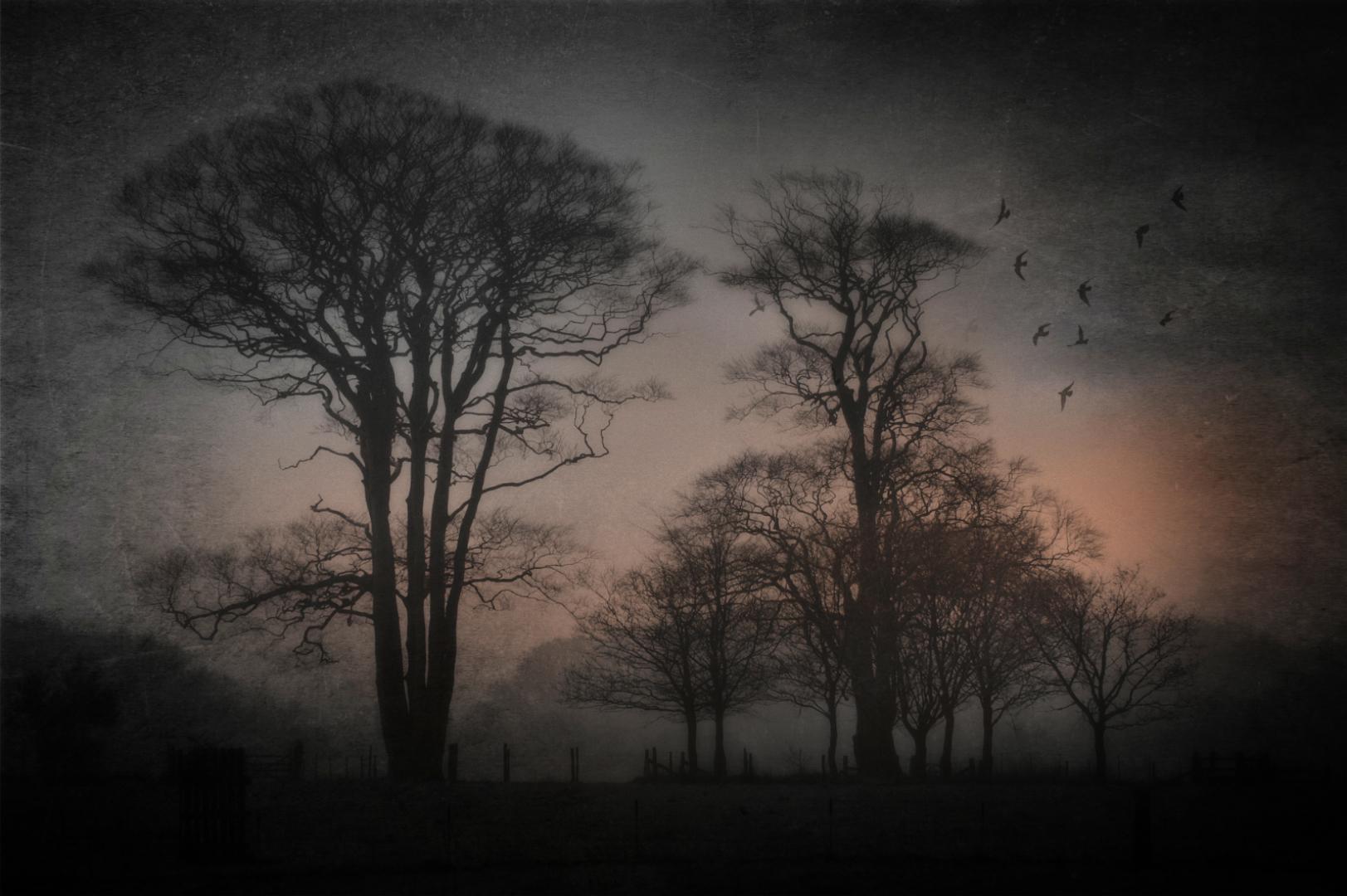 Dawn at Felbrigg