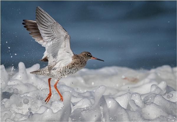 Redshank In Surf by Somerled7
