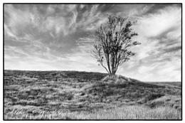 Tree in the Rock, Rannoch Moor