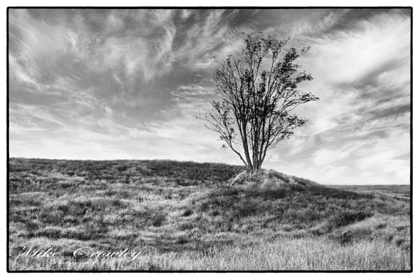 Tree in the Rock, Rannoch Moor by mikecrowley