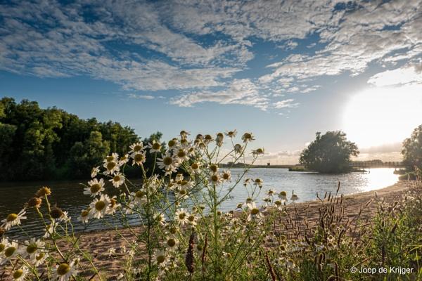 Wildflowers in the sunset by joop_