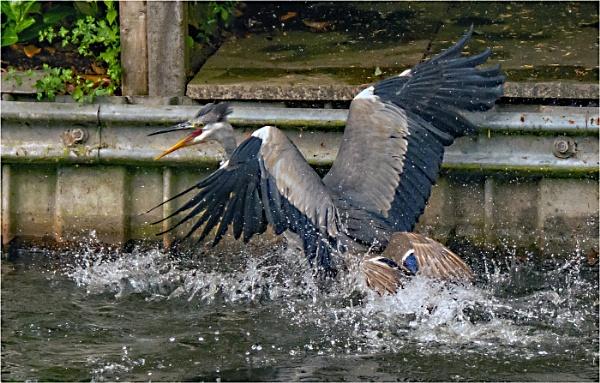 Water Battle by dven