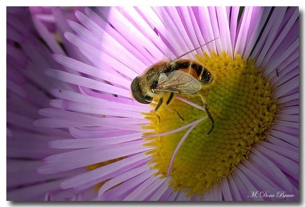 Bee by IamDora