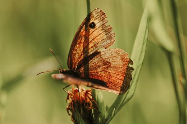 Butterfly by Harry2021