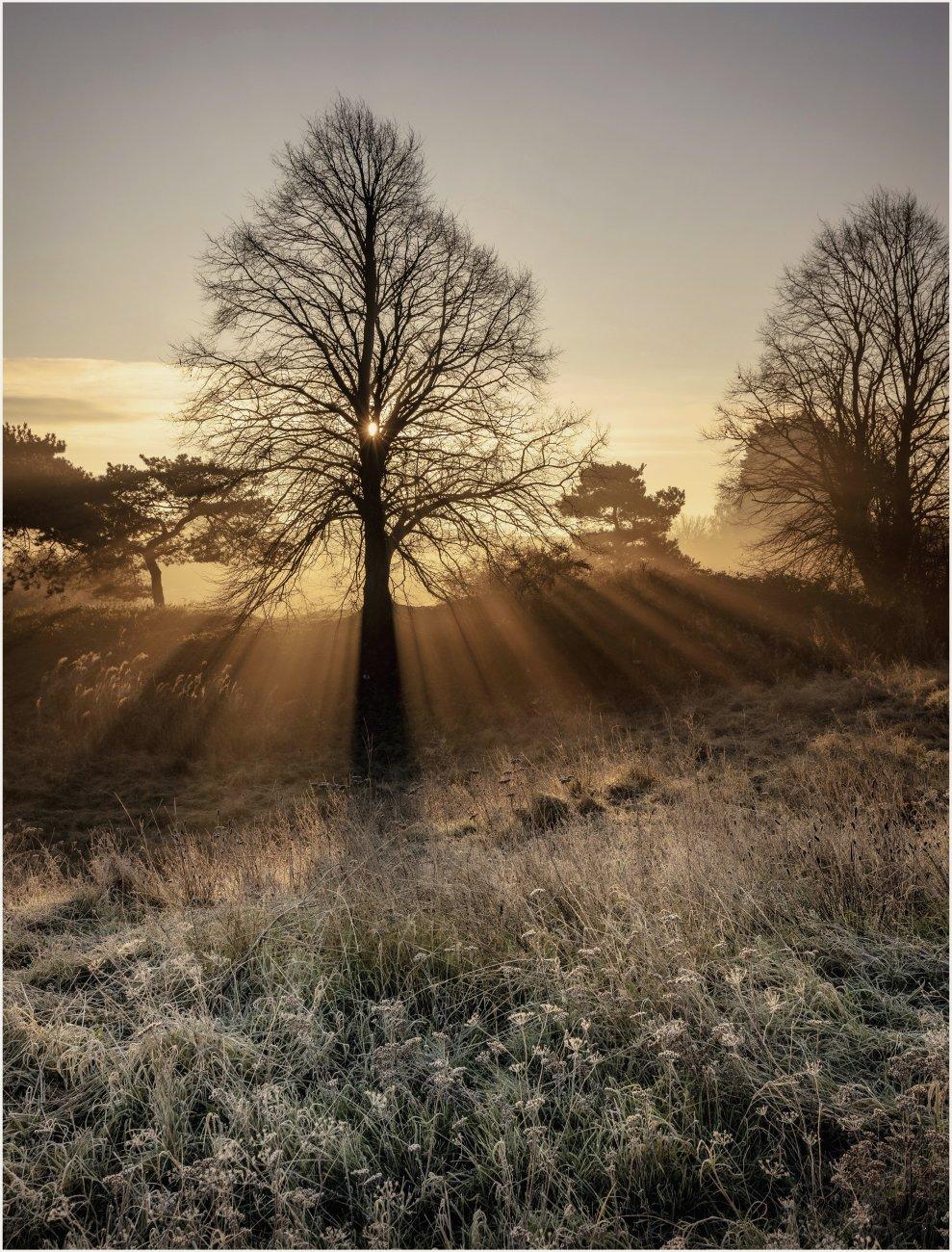 Bradlaugh dawn