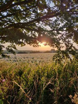A field near the wind mill..