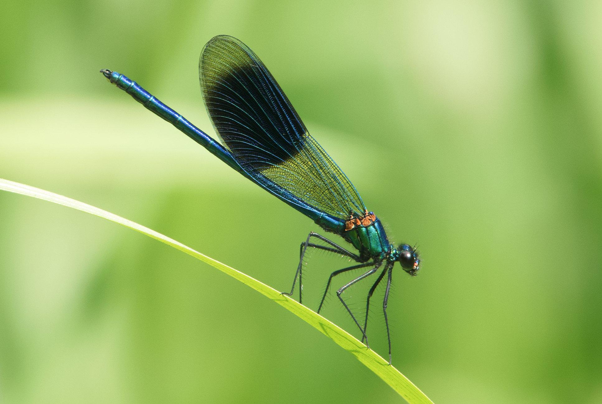Damsel fly 260721