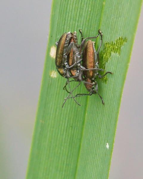 Beetle Trio by Alan_Baseley