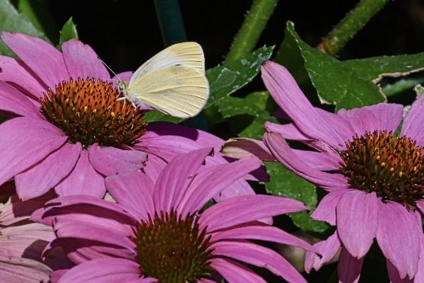 Flowers & Butterfly by Friendlyguy