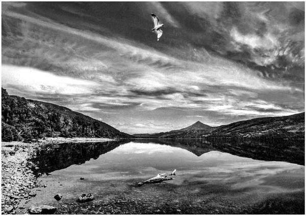 Lone Gull by mac