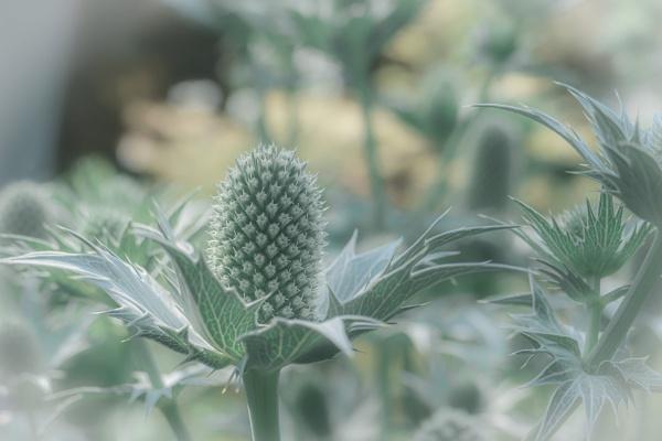 Greenify Summer by manicam