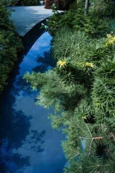 SPLASH OF SUMMER creek