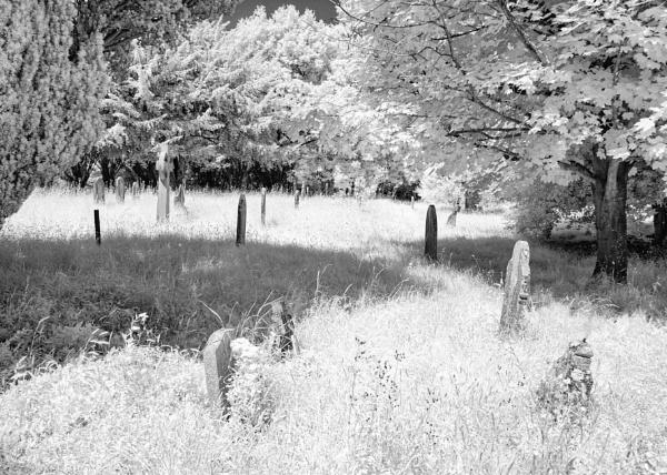Between the Trees by Nikonuser1