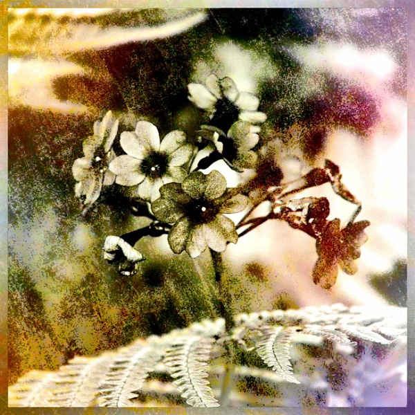 Floral Artwork by adagio