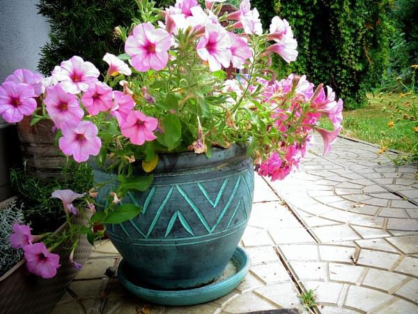 flowerpot full of flowers by elousteve