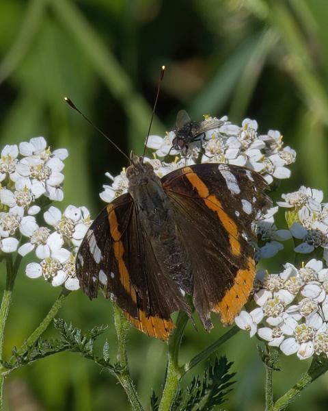 Butterfly & fly by joff76