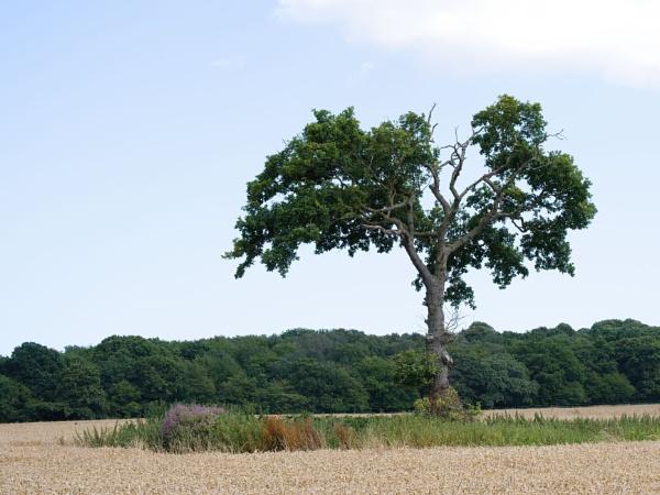Tree by joff76