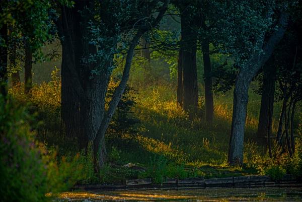 Sunrise Through The Trees by chensuriashi