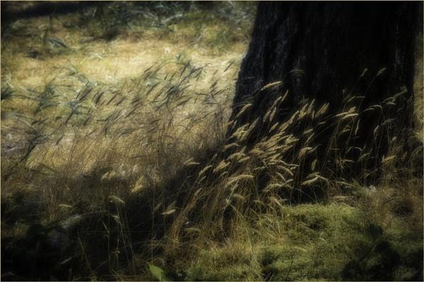 A Soft Breeze by Daisymaye