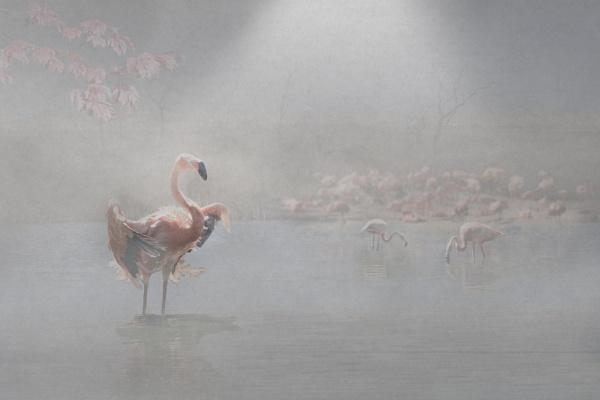 Flamingos by tonyng