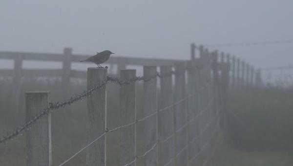 Misty Morning by Fogey