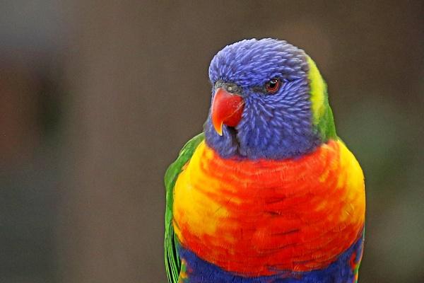 Parrot by MJJ2810