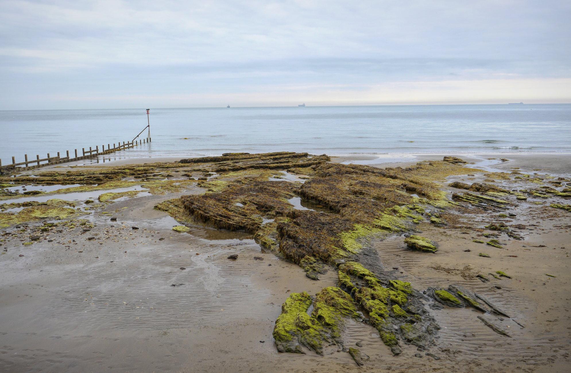 Shoreline IOW