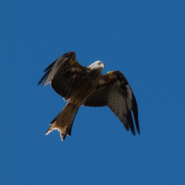 Bird of prey by joff76