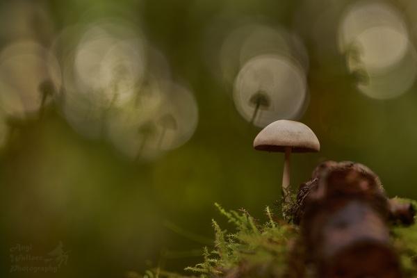 Mushroom season by Angi_Wallace
