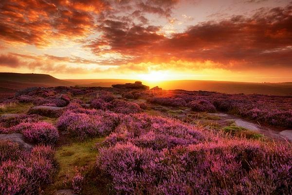 Peak District Bloom by BIGRY1