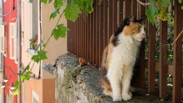 Spying Eyes 3 (Rovigno Croatia) by EveLine1