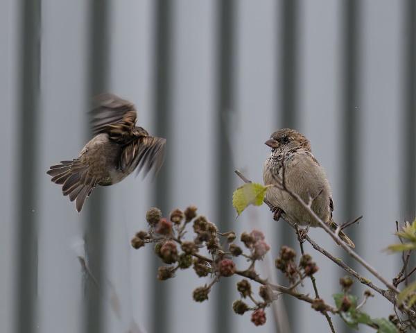Birds by joff76