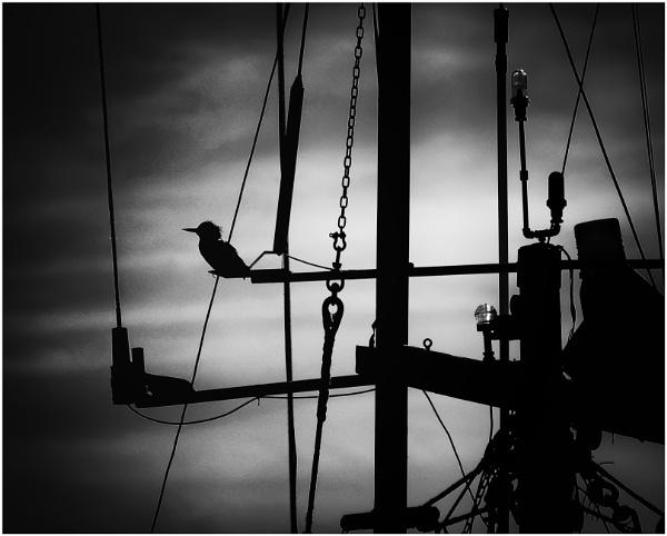 Ahoy!  Island Ahead by Daisymaye