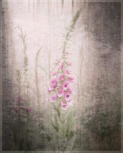 Magical Garden by sweetpea62