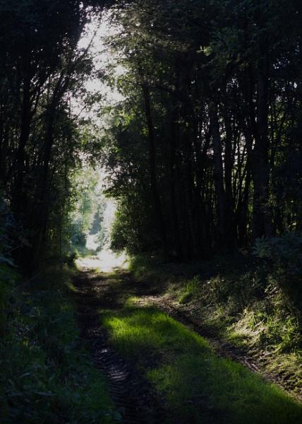 Country lane. by shishidog