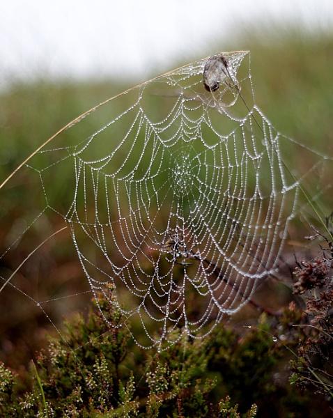 The web. by shishidog