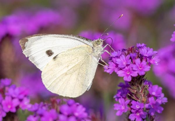 Butterfly by Danny1970