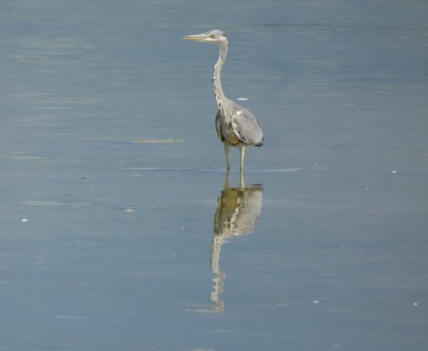 Reflect by Nigeltraveller