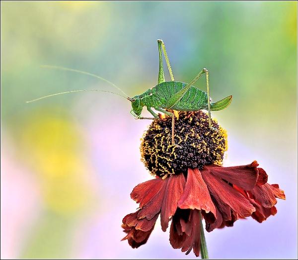Cricket. by bricurtis
