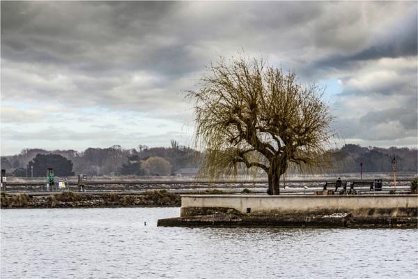 Lone Tree by blrphotos
