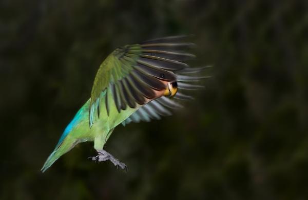 Lovebird by Gbloniarz