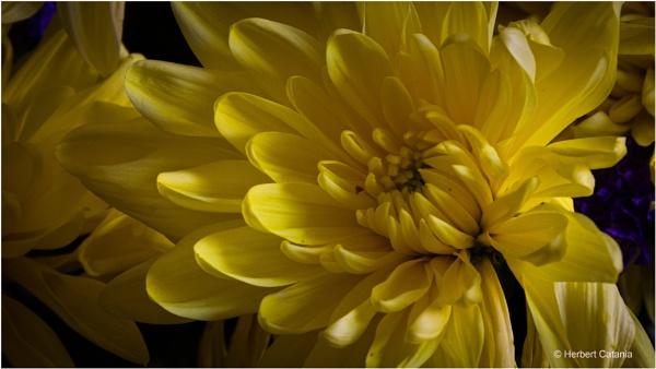 Close Up by Herbert_Catania