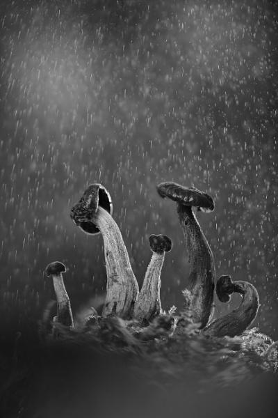 Mushroom family by Angi_Wallace